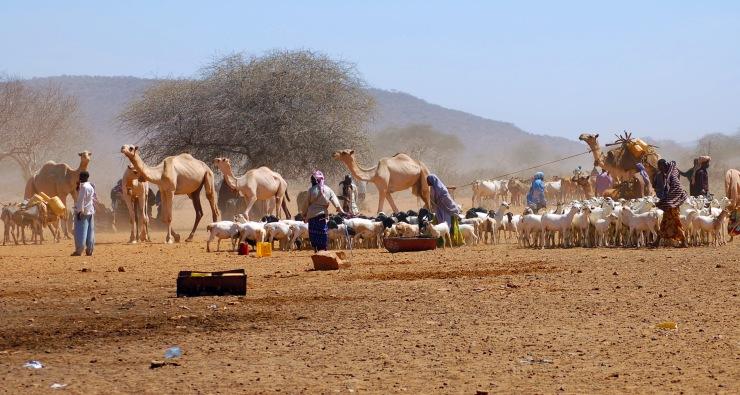 Somali herders, having traveled hundreds of miles, arrive at a water source in Mandera province, Kenya