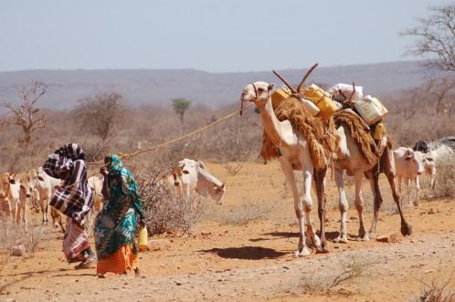 Somali herders in East Africa